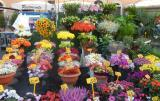 Flowers on display in the aptly named Campo dei Fiori in Rome